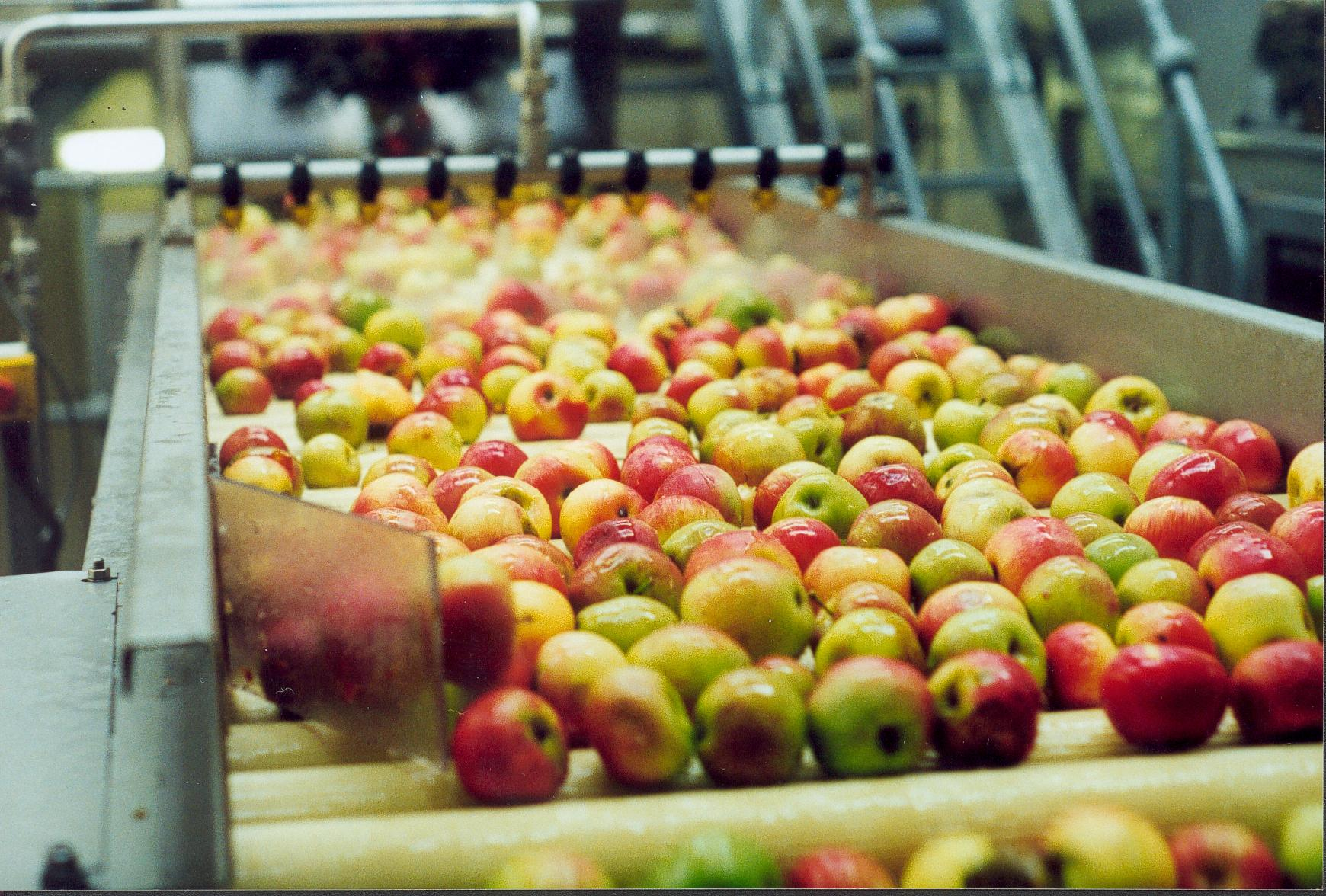 Cider mill's £1m investment plan for new orchards and 'green' apple projects