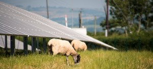 Bath solar farm firm aims to be powerful ally to the rural economy